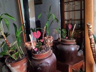 Seconde vie aux plantes
